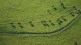 Road-trip-national-parks-USA-cows-trail-Grand-tetons-hot-air-balloon-Wyoming-summer-2013