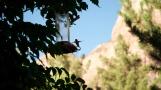 Road-trip-national-parks-USA-Zion-Utah-humingbird-summer-2013