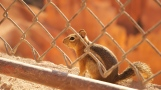Road-trip-USA-national-parks-squirrel-summer-2012