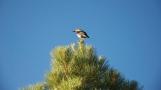 Road-trip-USA-National-Parks-Wild-life-Bird-summer-2012