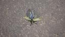 Zambia-fly-2010-livingstone