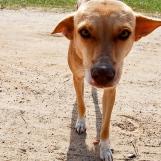 Cuba-Havana-2010-dog