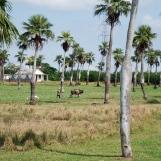 Cuba-Havana-2010-trees
