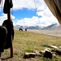 Mongolia-altai-mountains-tavanbogd-camp-tent-ulgi-thegeneralist