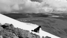 Mongolia-Tavan-bogd-national-park-dog-altai-mountains-Malchin-mountain-peak-russia-thegeneralist